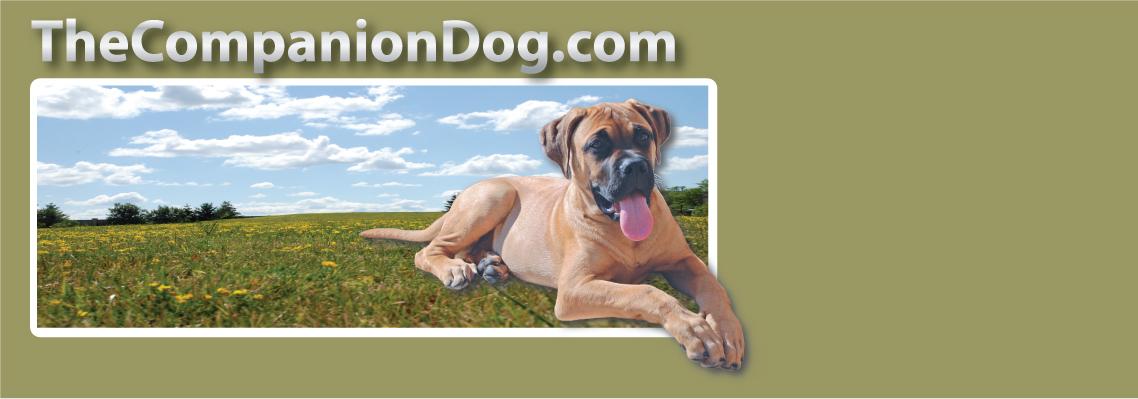 Dog Training Woodbridge Ontario